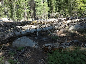 trees down on PCT/TRT in Desolation Wilderness