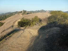 Lafayette Ridge in Briones Regional Park