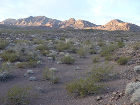 North McCullough Range in morning light