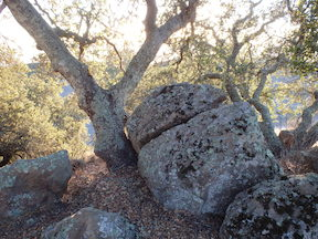 oaks and rocks at Wall Point