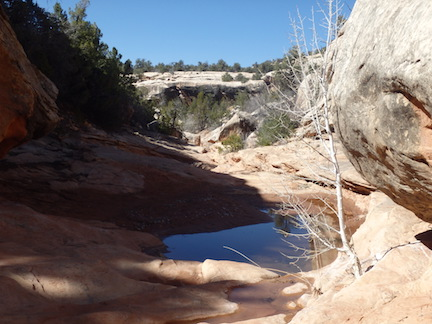 pool in Kane Gulch