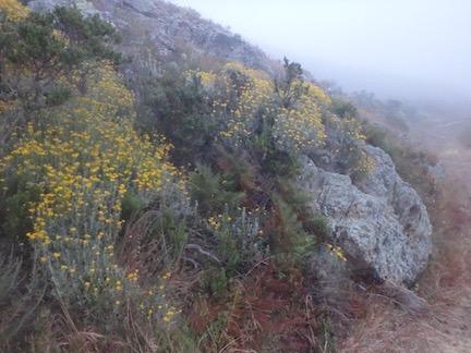 GGNRA_flower-rock-fog